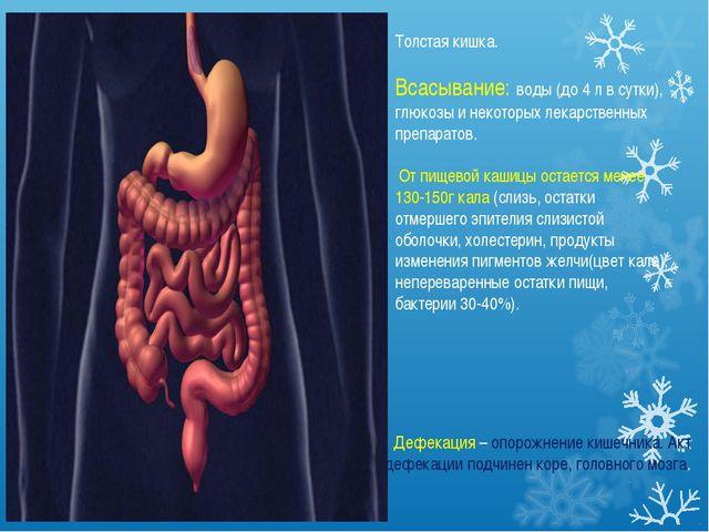 Толстая кишка. Всасывание: воды (до 4 л в сутки), глюкозы и некоторых лекарст...