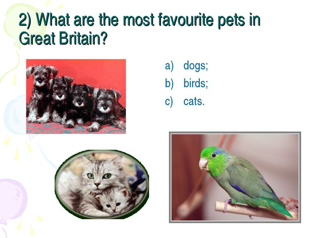 2) What are the most favourite pets in Great Britain? dogs; birds; cats.