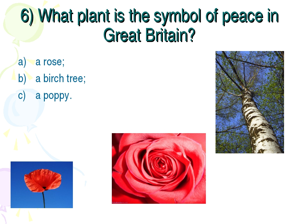 6) What plant is the symbol of peace in Great Britain? a rose; a birch tree;...