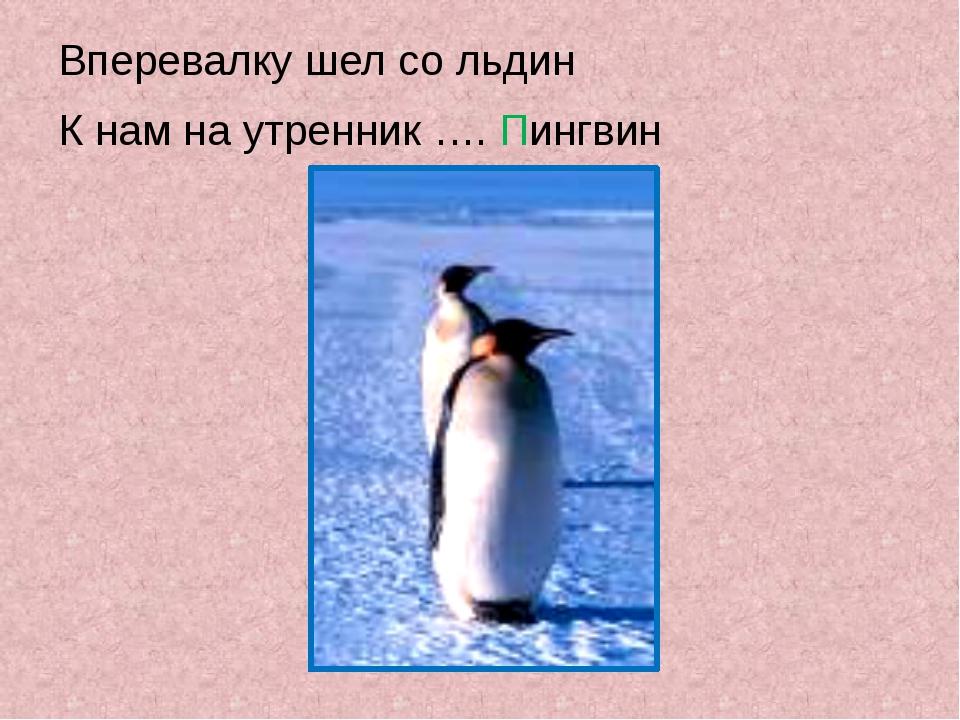 Вперевалку шел со льдин К нам на утренник …. Пингвин