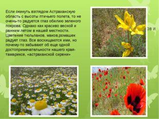 Фото полей тюльпанов и т.д Если окинуть взглядом Астраханскую область с высот