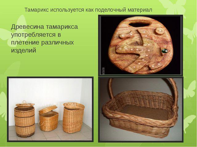 Тамарикс используется как поделочный материал Древесина тамарикса употребляет...