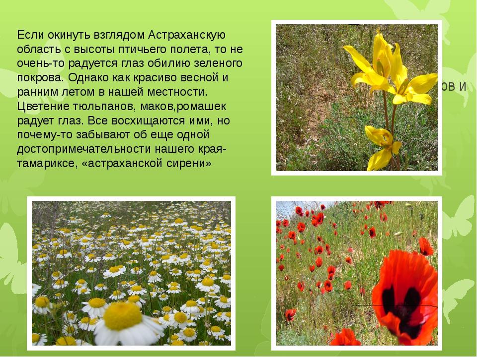 Фото полей тюльпанов и т.д Если окинуть взглядом Астраханскую область с высот...