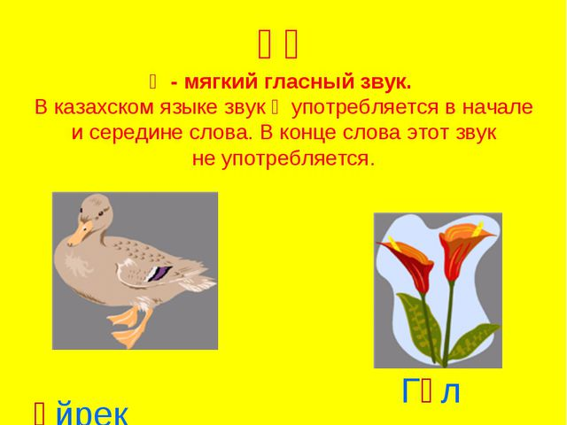 Үү Ү - мягкий гласный звук. В казахском языке звук ү употребляется в начале...
