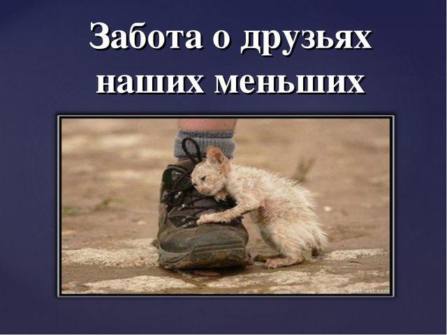 Забота о друзьях наших меньших {