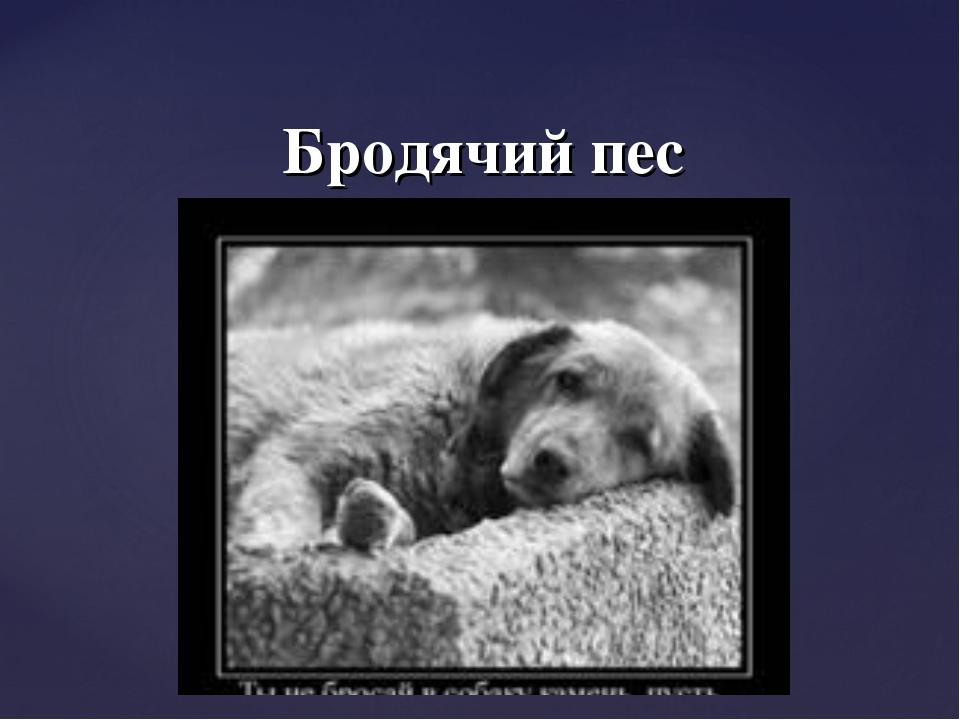 Бродячий пес