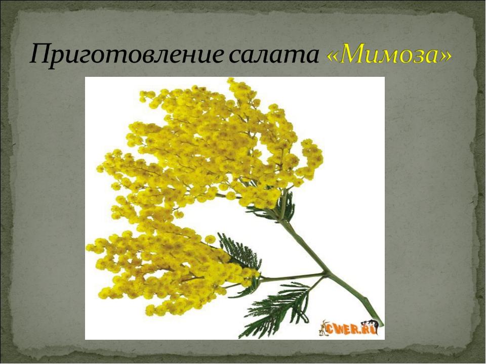 Презентация о салате мимоза