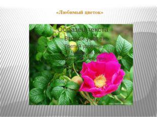 «Любимый цветок»