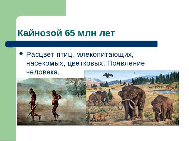 Кайнозой 65 млн лет Расцвет птиц, млекопитающих, насекомых, цветковых. Появле...