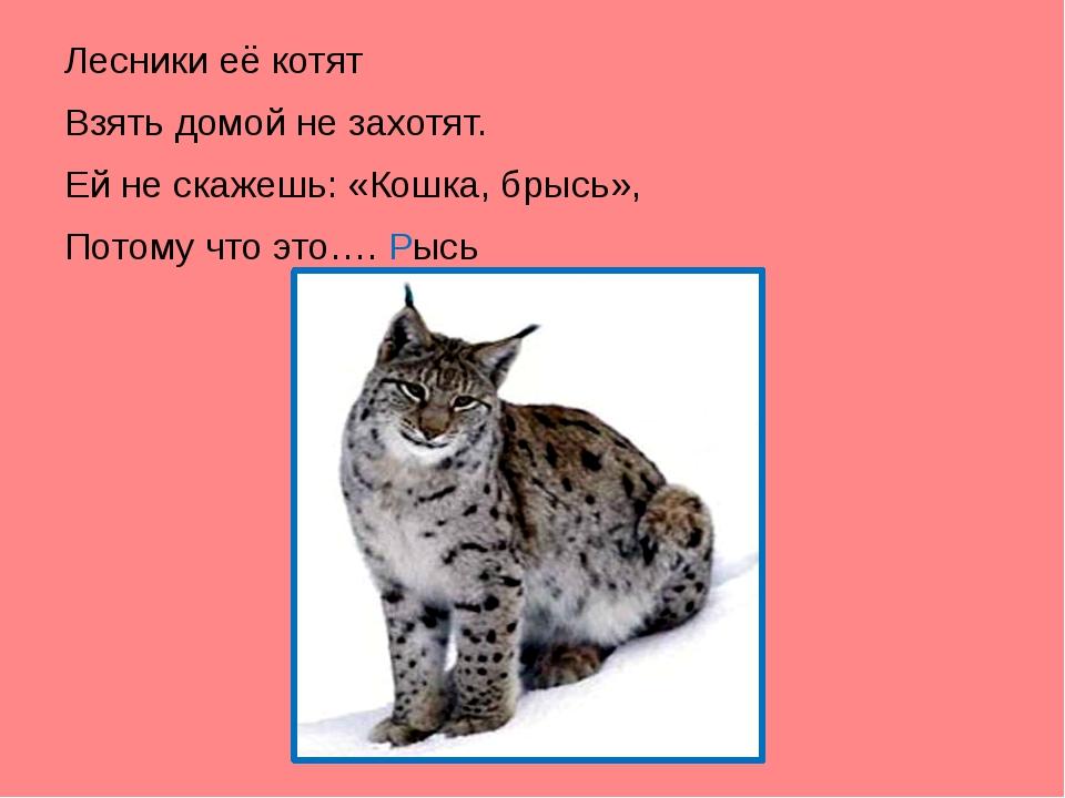 Лесники её котят Взять домой не захотят. Ей не скажешь: «Кошка, брысь», Пото...