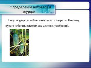 Определение нитратов в огурцах. Плоды огурца способны накапливать нитраты. П