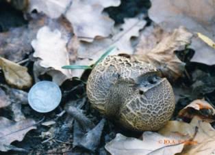 Ядовитые грибы Воронежской области