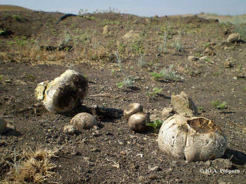 Съедобные грибы Воронежской области
