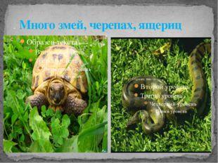 . Много змей, черепах, ящериц