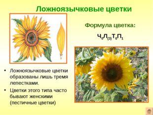 Ложноязычковые цветки Формула цветка: Ч0Л(3)Т0П1 Ложноязычковые цветки образо