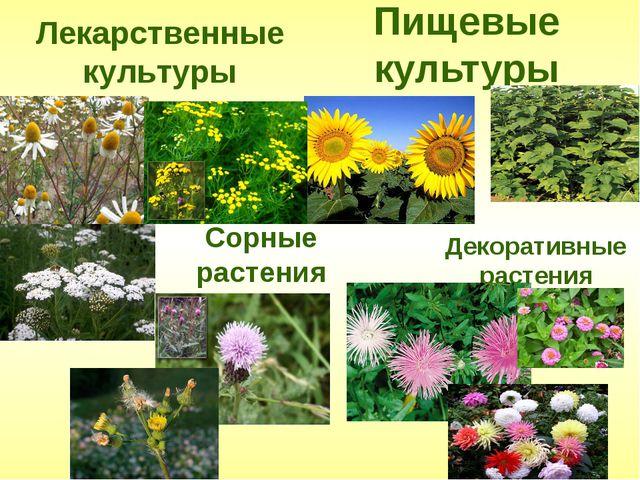 Пищевые культуры Лекарственные культуры Сорные растения Декоративные растения