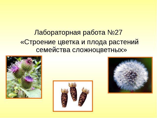 Лабораторная работа №27 «Строение цветка и плода растений семейства сложноцве...