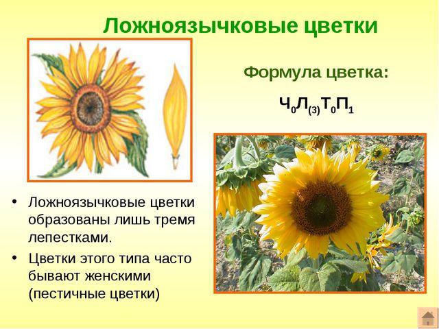 Ложноязычковые цветки Формула цветка: Ч0Л(3)Т0П1 Ложноязычковые цветки образо...