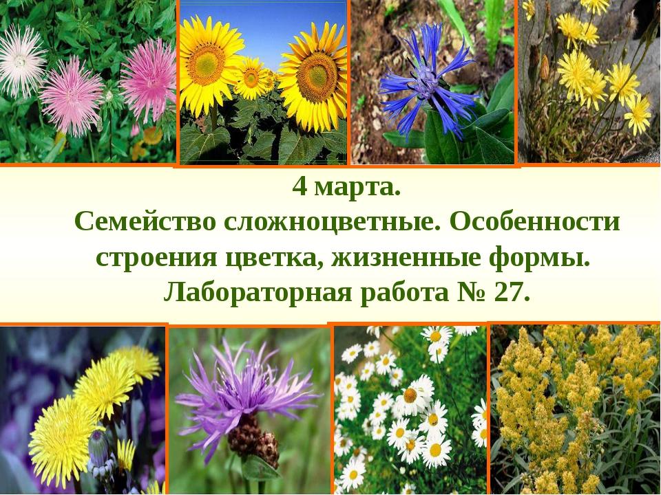 4 марта. Семейство сложноцветные. Особенности строения цветка, жизненные форм...