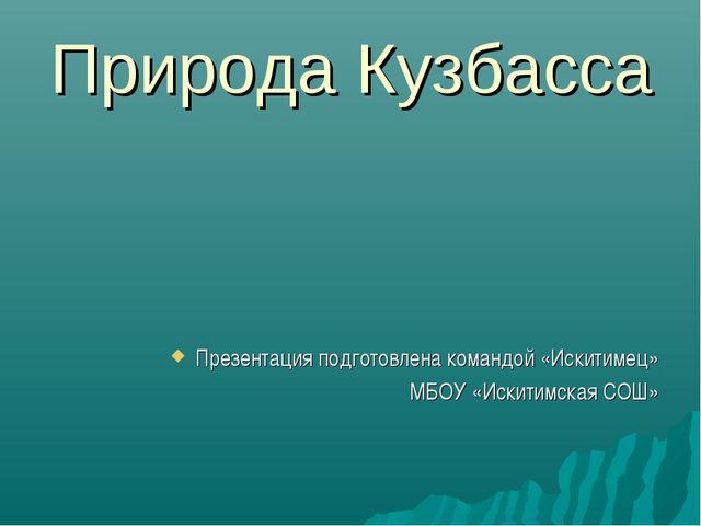 Природа Кузбасса Презентация подготовлена командой «Искитимец» МБОУ «Искитимс...