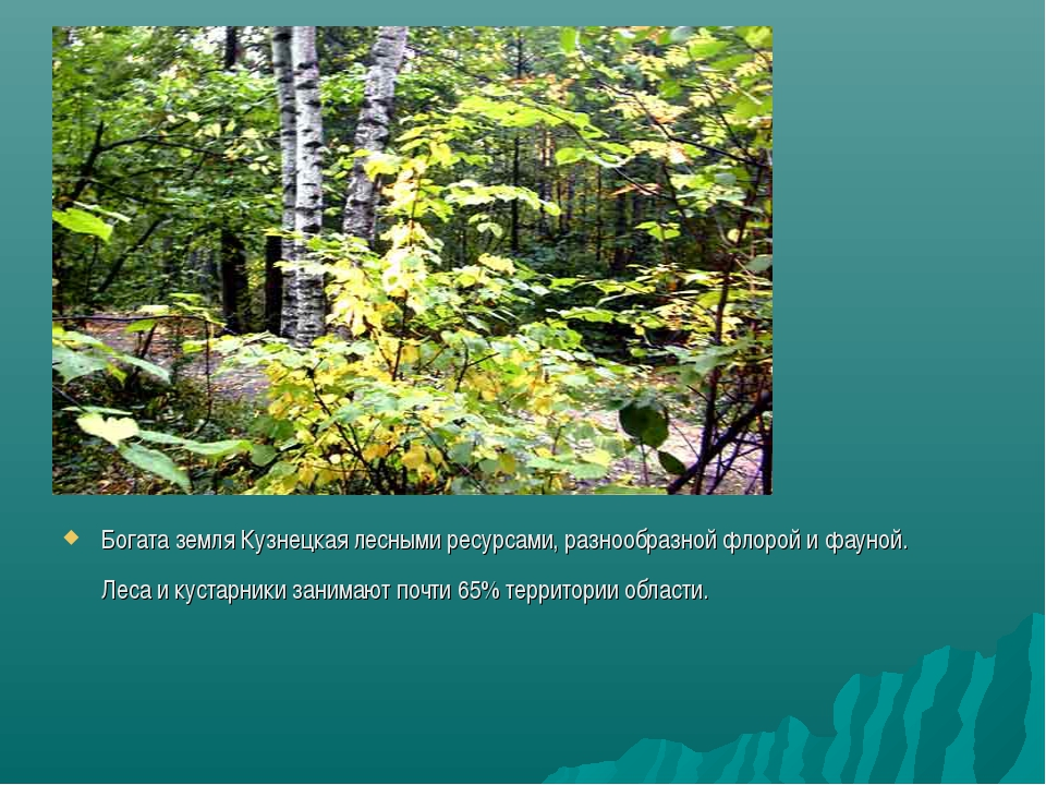 Богата земля Кузнецкая лесными ресурсами, разнообразной флорой и фауной. Леса...