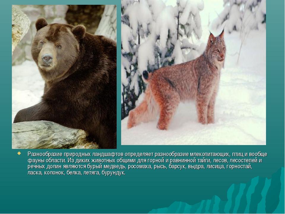 Разнообразие природных ландшафтов определяет разнообразие млекопитающих, птиц...