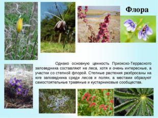 Флора Однако основную ценность Приокско-Террасного заповедника составляют не