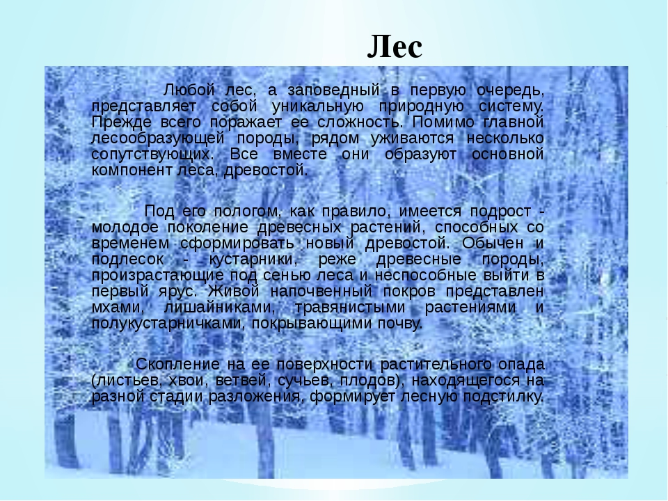 Лес Любой лес, а заповедный в первую очередь, представляет собой уникальную п...