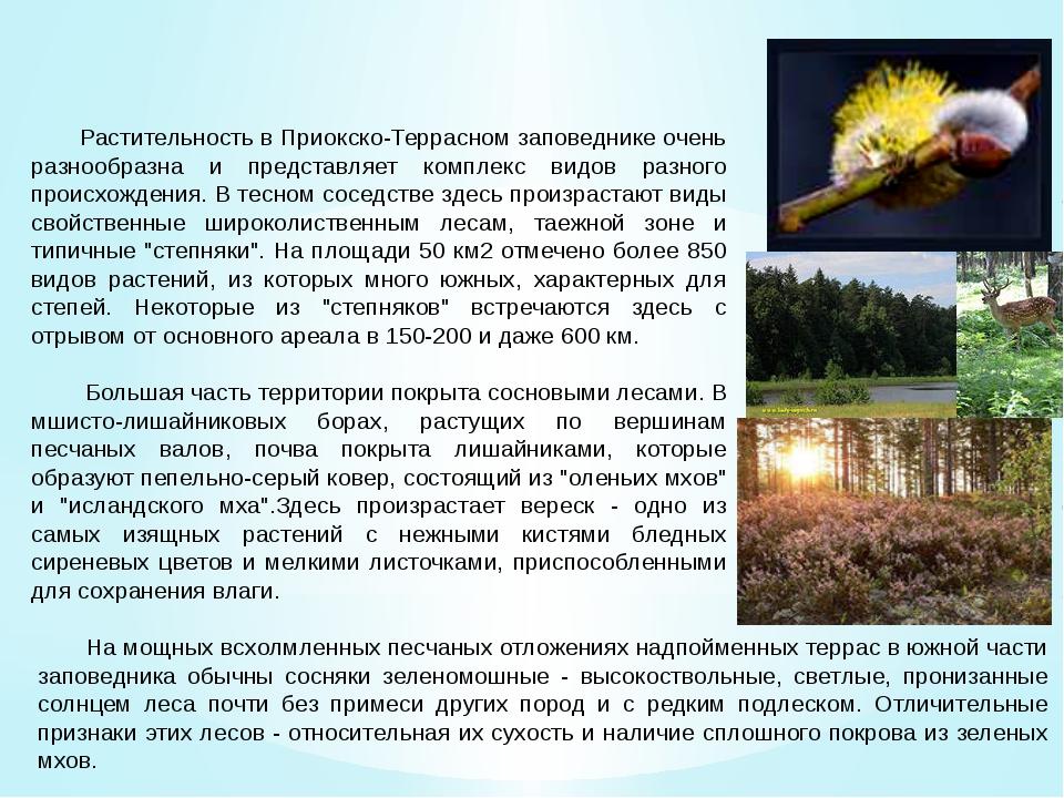 Флора Растительность в Приокско-Террасном заповеднике очень разнообразна и пр...