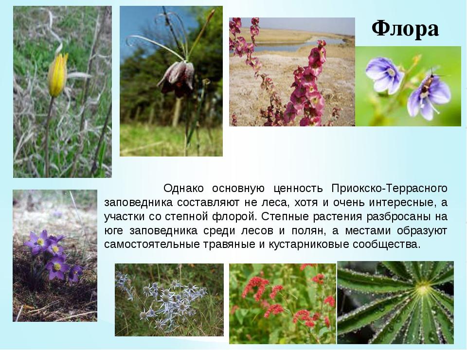 Флора Однако основную ценность Приокско-Террасного заповедника составляют не...