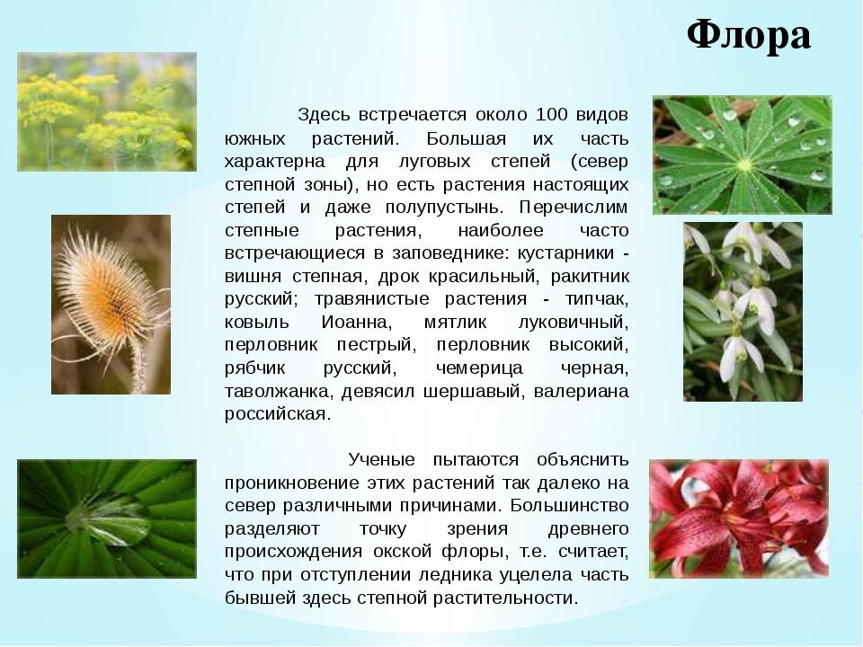Флора Здесь встречается около 100 видов южных растений. Большая их часть хара...