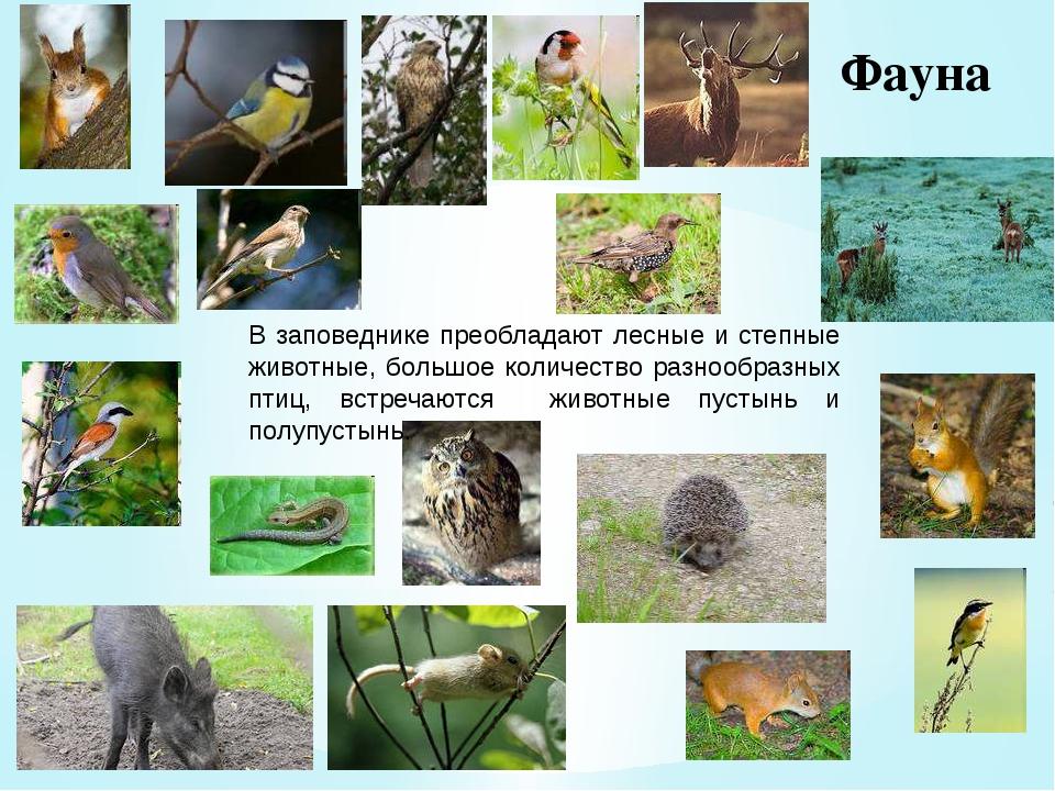 Фауна В заповеднике преобладают лесные и степные животные, большое количество...