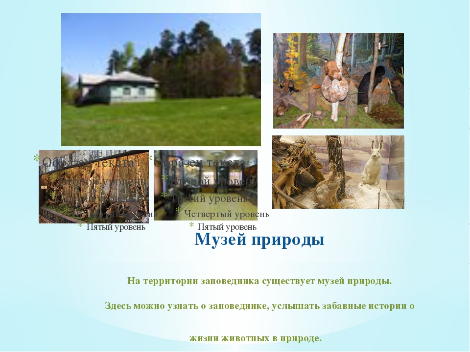 Музей природы На территории заповедника существует музей природы. Здесь можно...