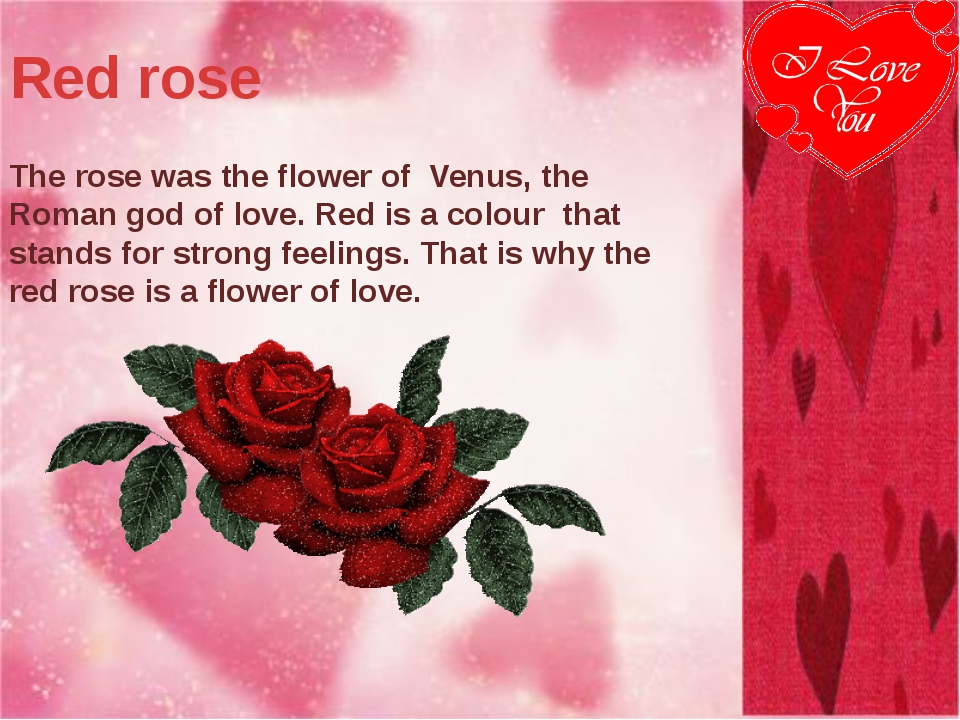 Red rose The rose was the flower of Venus, the Roman god of love. Red is a co...