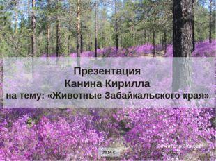 Презентация Канина Кирилла на тему: «Животные Забайкальского края» 2014 г. У