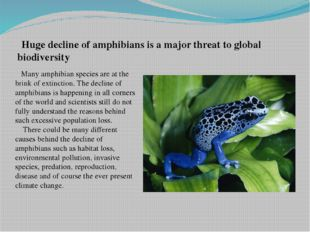 Huge decline of amphibians is a major threat to global biodiversity Many amp