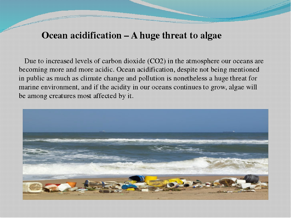 Ocean acidification – A huge threat to algae Due to increased levels of carbo...