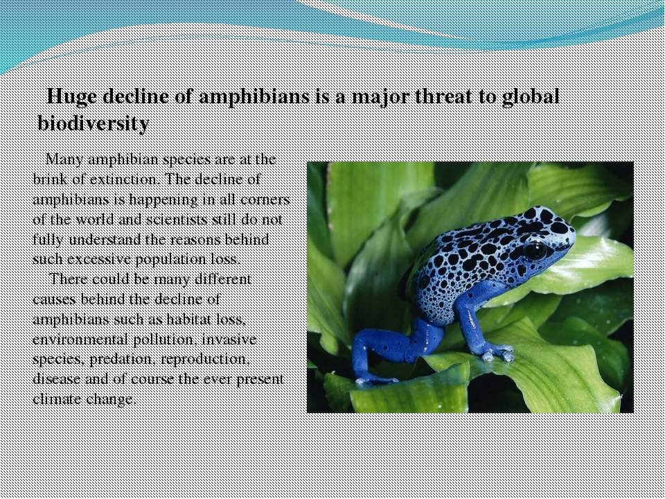 Huge decline of amphibians is a major threat to global biodiversity Many amp...