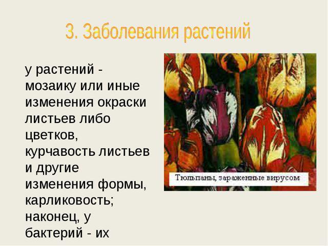 у растений - мозаику или иные изменения окраски листьев либо цветков, курчаво...