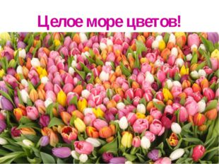 Целое море цветов!