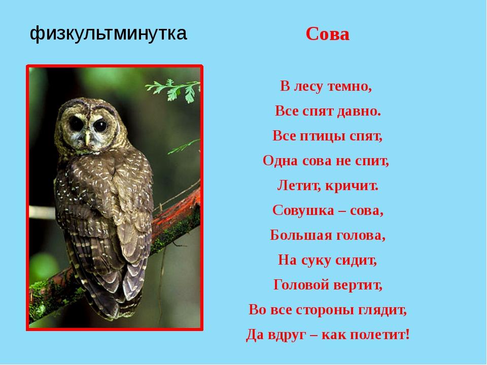 физкультминутка Сова В лесу темно, Все спят давно. Все птицы спят, Одна сова...