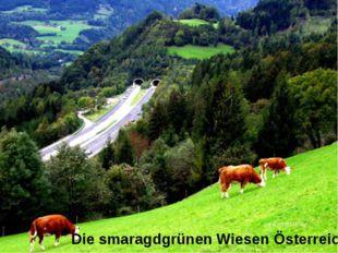 Die smaragdgrünen Wiesen Österreichs