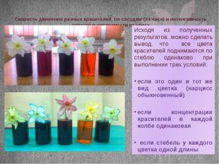 Скорость движения разных красителей по сосудам (24 часа) и интенсивность окра