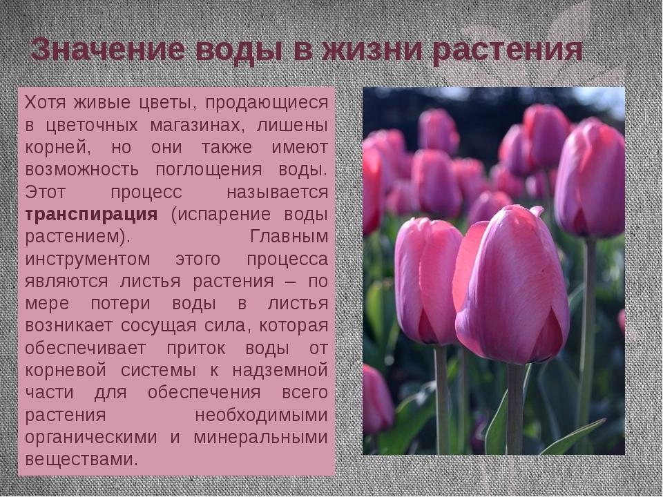Значение воды в жизни растения Хотя живые цветы, продающиеся в цветочных мага...