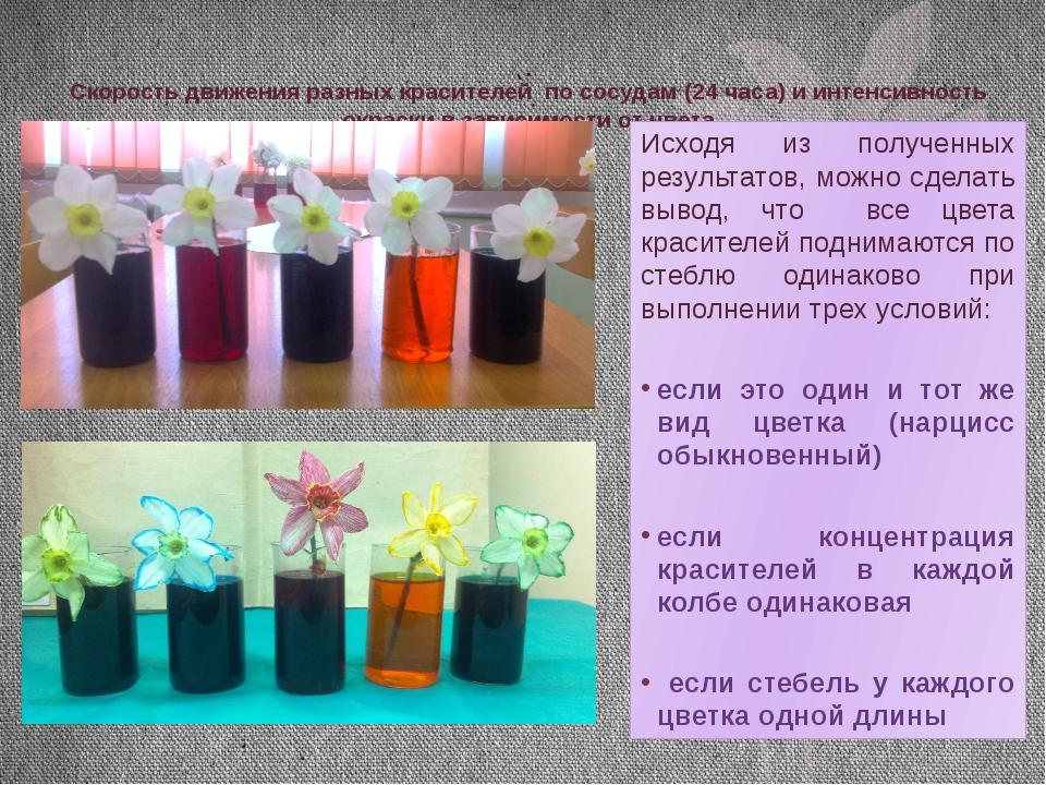 Скорость движения разных красителей по сосудам (24 часа) и интенсивность окра...