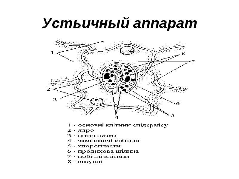 http://raz.uchise.ru/pars_docs/refs/309/308352/img14.jpg