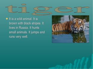 It is a wild animal. It is brown with black stripes. It lives in Russia. It h