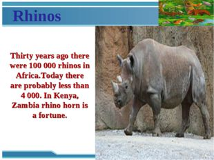 Rhinos Thirty years ago there were 100 000 rhinos in Africa.Today there are p