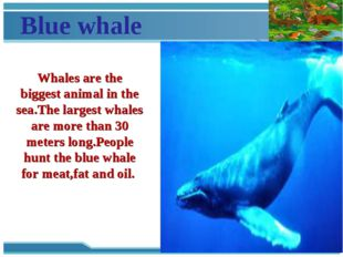 Blue whale Whales are the biggest animal in the sea.The largest whales are mo