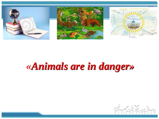 «Animals are in danger»